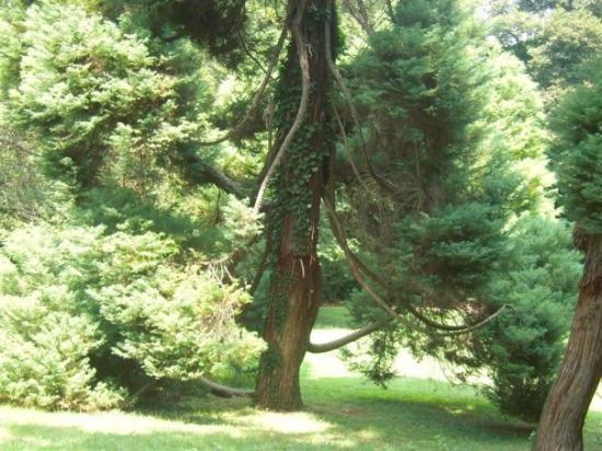 Caserta, Italy: English gardens