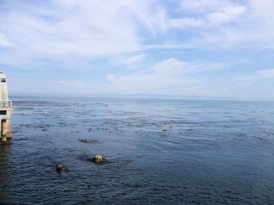 Monterey Bay National Marine Sanctuary: A nice ocean view.