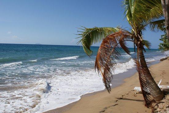 Rincon Inn: backyard beach