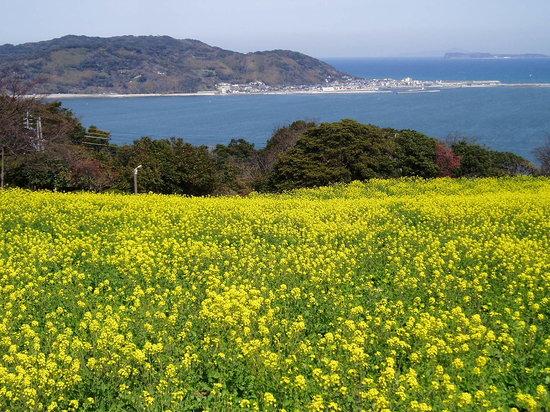 Nokonoshima Island