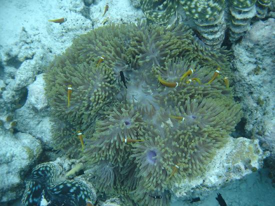 Biyadhoo Island Resort: Nemos