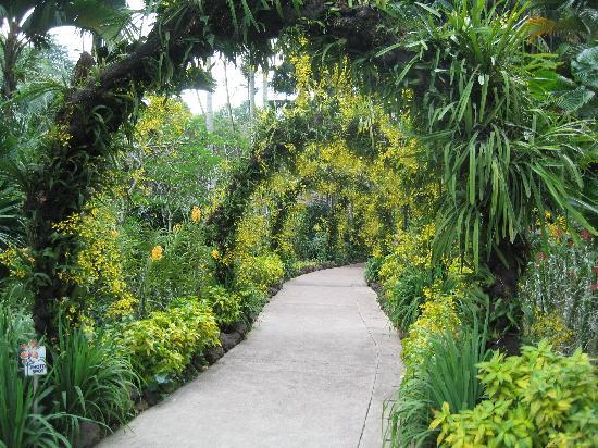 Hotel Miramar: orchid garden