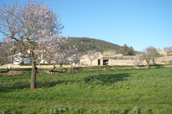 Ibiza Valle de Santa Agnes