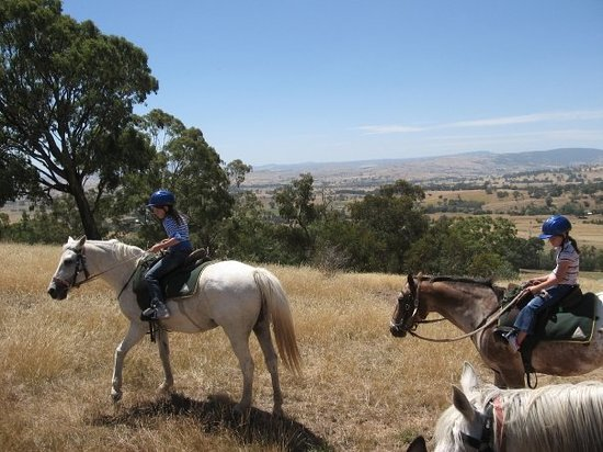 Adventure Victoria - Private Day Tours: View from the top of Snowy River Ranges