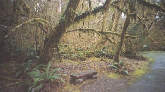 2005 hoh rain forest wa picture of forks washington for Cabin rentals olympic national forest