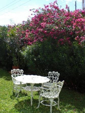 Montejo Palace: pretty garden