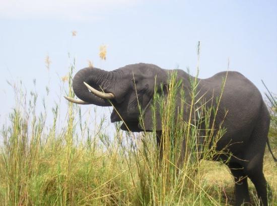 Harare, Zimbabwe: elephant