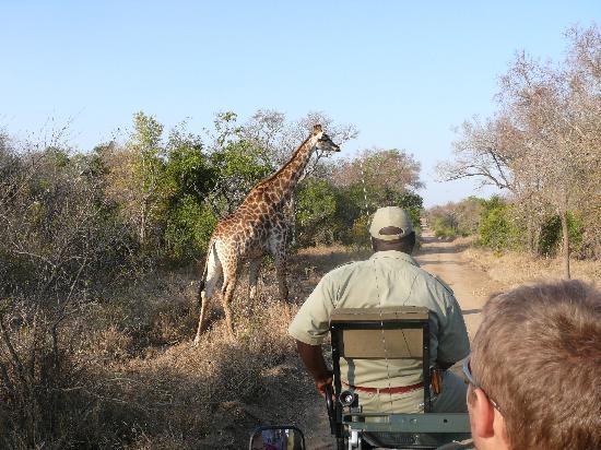 Gwalagwala: Safari