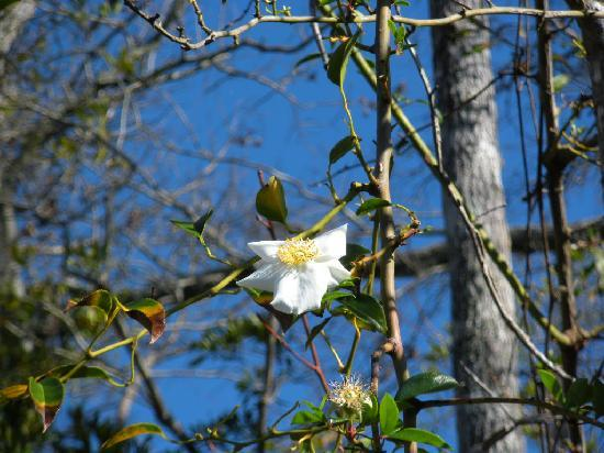 Colonial Coast Eco Tours: Beautiful foliage and flowers along with awesome birds and wildlife.