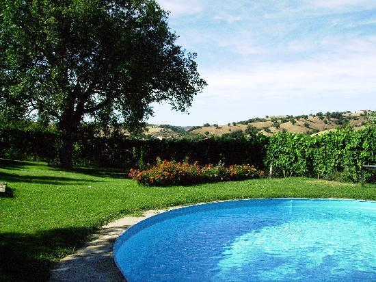 Podere Santa Teresa: The nice pool in the soft meadow