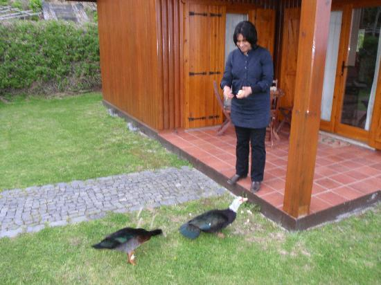 Quinta dos Curubas: The ducks are also friendly