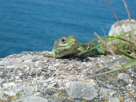 Foto de Cabo Finisterre