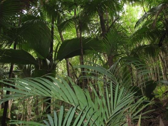 Praslin-øya, Seychellene: Vallée de Mai - Praslin
