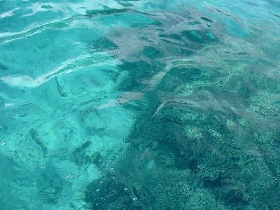The Clearest Water In The World Is In Bora Bora Picture