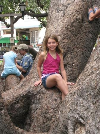 Climbing on the Banyan Tree in Lahaina. - Picture of ...