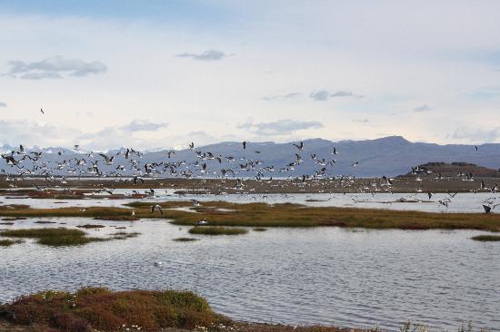 LAGUNA NIMEZ RESERVA NATURAL MUNICIPAL: Birds in flight