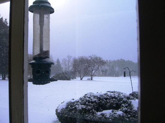 Devonfield Inn: Watching the Birds and The Snow Falling