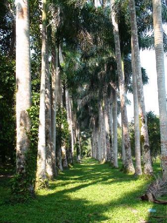 Caribbean Coral Inn: Palm Avenue (Botanical Garden)
