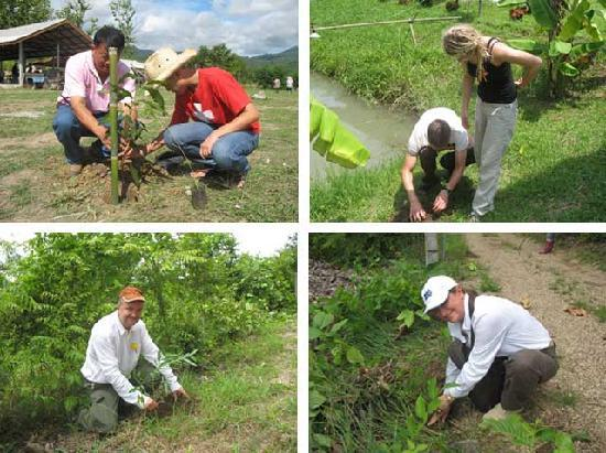 Ban Rai Tin Thai Ngarm Eco Lodge: You can take part in the project planting more to keep the world green.