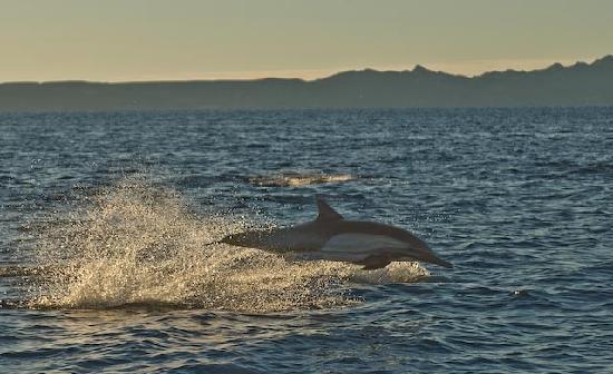 Las Cabanas de Loreto: Dolphins!