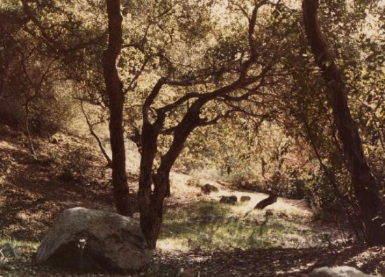 San Juan Capistrano, Καλιφόρνια: 1985 Cleveland National Forest, Ortega Highway, CA