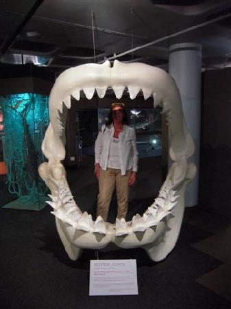Cape Town sentrum, Sør-Afrika: Lo squalo preistorico