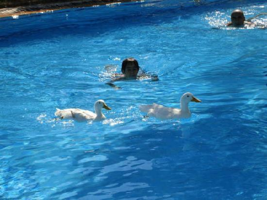 Antik Zeytin Hotel & Art : Great swimming pool! we tried it with the ducks but you don't have to!