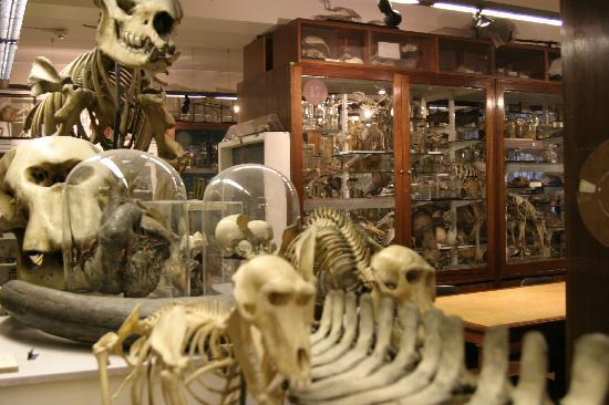 Photo of Grant Museum of Zoology in London, , GB