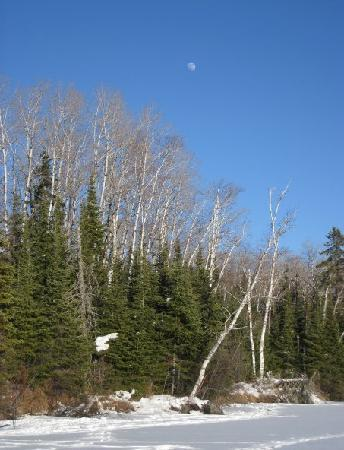 Wintergreen Dogsled Lodge: Moon (during the day)