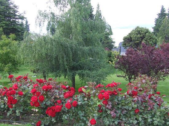 Villa Huinid Resort & Spa: los jardines