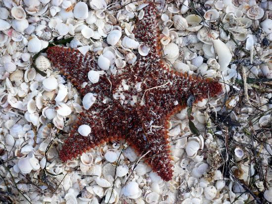Holbox Hotel Casa las Tortugas - Petit Beach Hotel & Spa: Great beach