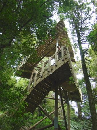Maungakawa Scenic Reserve: Lookout tower