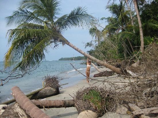 Kelly Creek Hotel: Beach in the National park Cahuita