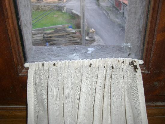 Hotel Palacio Guevara: Moscas muertas en las cortinillas
