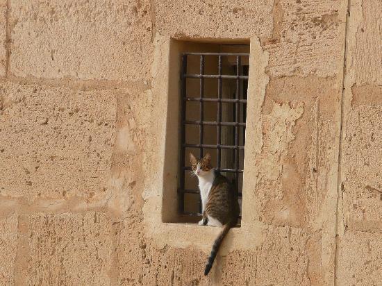 Hotel Riu Palace Oceana Hammamet: hammameth cat