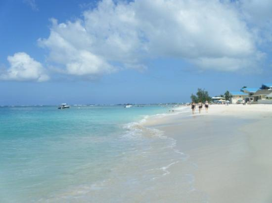 Image Result For Boatswain Beach Cayman Islands