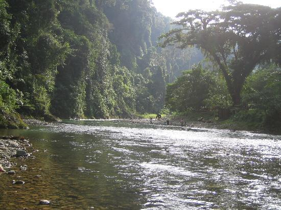 Expedition Jungle : The beautiful River Bohorok that runs through Bukit Lawang