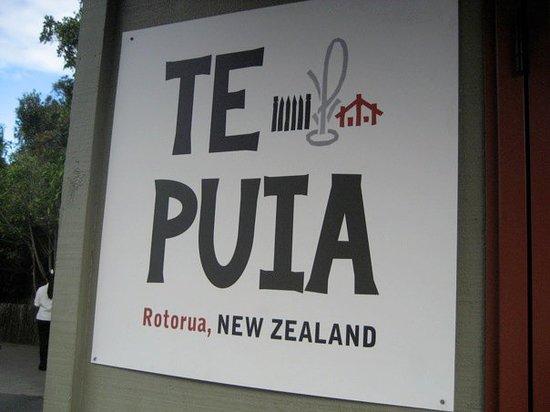 Te Puia Foto