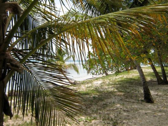Mustique: IMG_0208