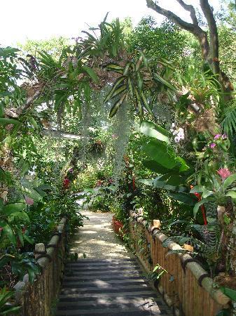 Jurong Fuglepark: Beautiful trees & plants