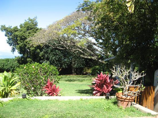 Banyan Bed and Breakfast Retreat: yard behind one of the cottages