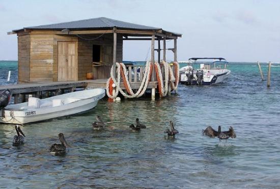 Ambergris Caye foto