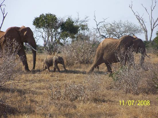 Tsavo National Park East, Kenya: Bby elephant well loooked after