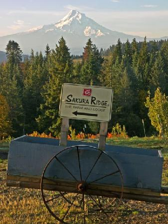 Sakura Ridge - The Farm and Lodge: Mt. Hood