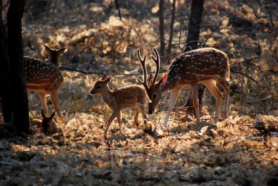 Gir National Park Photo