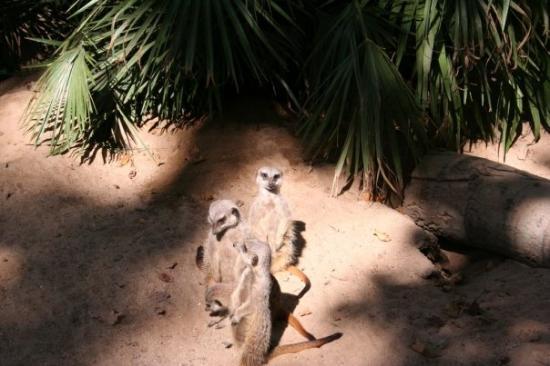 Barcelona Zoo: Barcellona Zoo