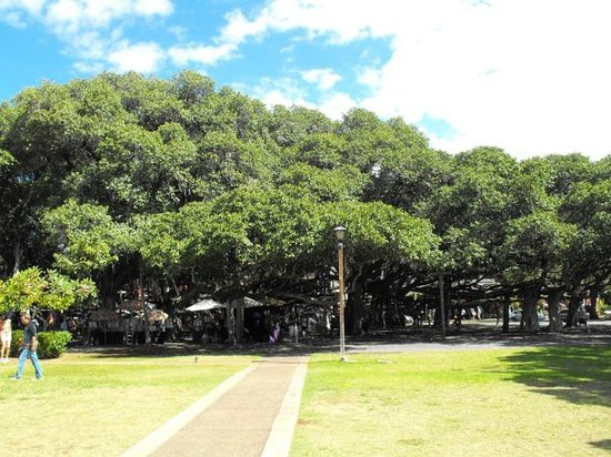 ‪Banyan Tree Park‬