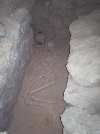Bahrain National Museum: Esto es en el museo nacional , muestra , obviamente, osamentas de alguien que se  murio cueck ,