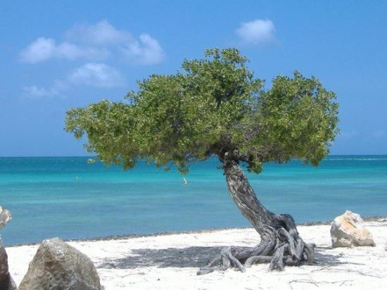 Aruba is known for the dutch style buildings as well as the many dutch people that reside there - Divi beach aruba ...