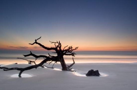 Остров Сент-Симон, Джорджия: Driftwood Beach